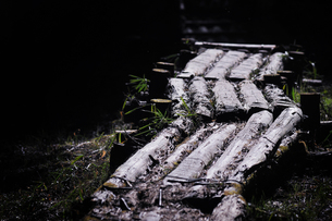 森の小道の写真素材 [FYI00126134]