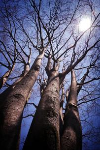 大きな木と太陽の写真素材 [FYI00126138]
