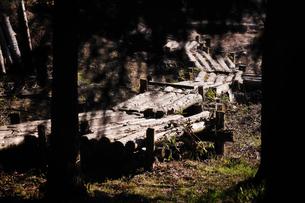 森の道の写真素材 [FYI00126140]