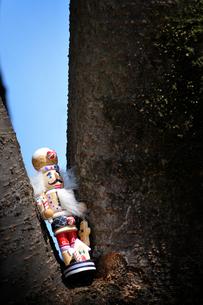 木の上のくるみ割り人形の写真素材 [FYI00126147]