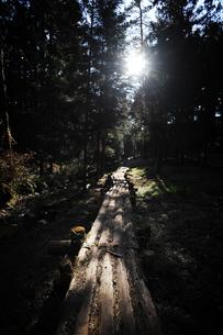 木漏れ日の森の道の写真素材 [FYI00126148]