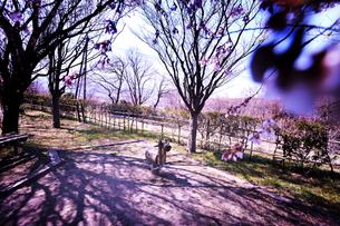 公園の木馬の素材 [FYI00126149]