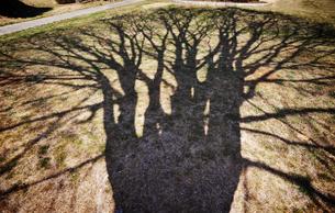 大きな木の陰の写真素材 [FYI00126152]