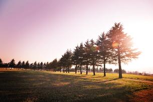 夕焼けの並木の写真素材 [FYI00126164]