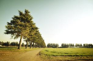 並木の写真素材 [FYI00126167]