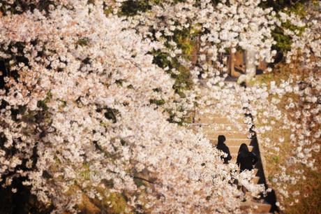 桜越しのカップルの素材 [FYI00126251]