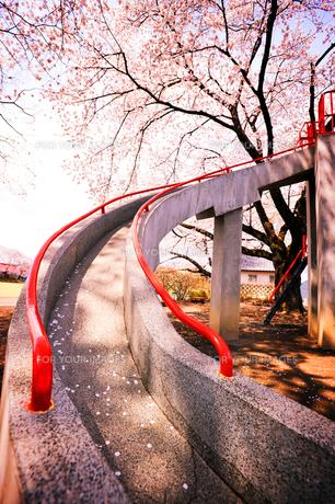 公園の桜と滑り台の写真素材 [FYI00126312]