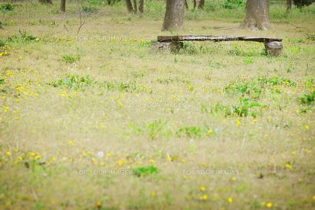 タンポポの草原とベンチの素材 [FYI00126335]