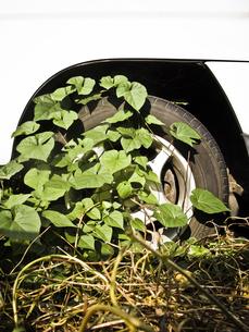 軽自動車とタイヤと草の写真素材 [FYI00126357]