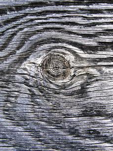 木の年輪の写真素材 [FYI00126371]