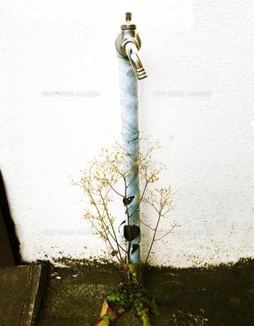 水道と花の写真素材 [FYI00126376]