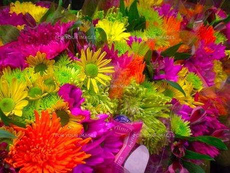 カラフルな花束の写真素材 [FYI00126401]