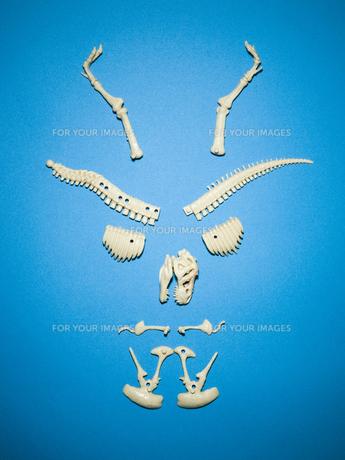 恐竜骨格模型の顔の写真素材 [FYI00126407]