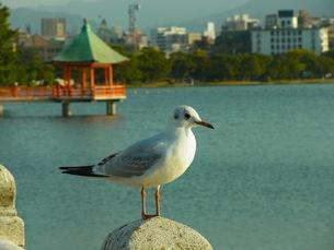東屋と水鳥の写真素材 [FYI00126409]