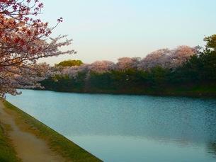春の川の写真素材 [FYI00126419]