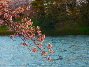 春の川の写真素材 [FYI00126430]