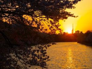 春の夕日の写真素材 [FYI00126434]