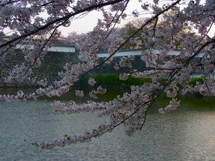 春のお堀の写真素材 [FYI00126442]