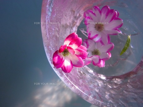 水に浮かぶ花の写真素材 [FYI00126464]