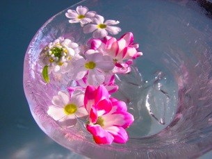 水に浮かぶ花の写真素材 [FYI00126468]