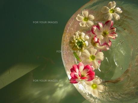 水に浮かぶ花の素材 [FYI00126470]