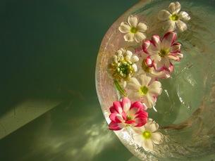 水に浮かぶ花の写真素材 [FYI00126470]