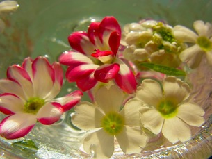 水に浮かぶ花の写真素材 [FYI00126471]