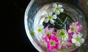 水に浮かぶ花の素材 [FYI00126482]