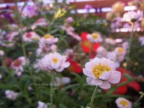 庭の写真素材 [FYI00126484]