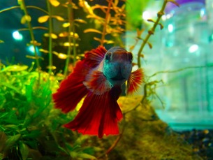 熱帯魚の写真素材 [FYI00126487]