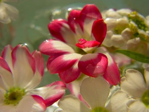 水に浮かぶ花の写真素材 [FYI00126488]
