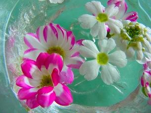 水に浮かぶ花の写真素材 [FYI00126489]