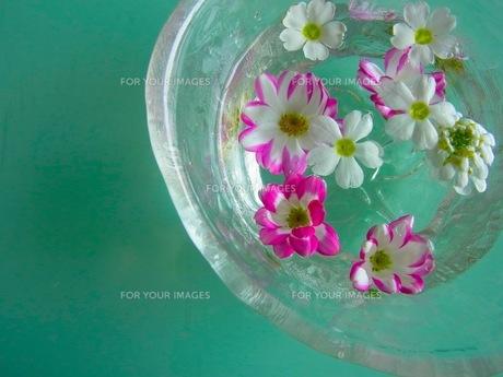 水に浮かぶ花の素材 [FYI00126490]