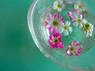 水に浮かぶ花の写真素材 [FYI00126490]