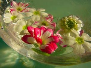水に浮かぶ花の写真素材 [FYI00126498]