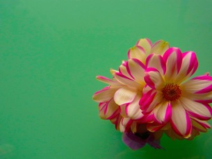 小さなブーケの写真素材 [FYI00126708]