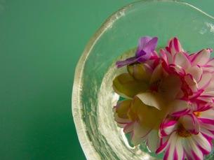 水に浮かんだ花の写真素材 [FYI00126710]