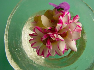 水に浮かんだ花の写真素材 [FYI00126712]