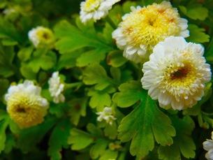 白い花の写真素材 [FYI00126718]