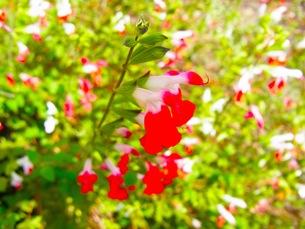 赤い花の写真素材 [FYI00126811]