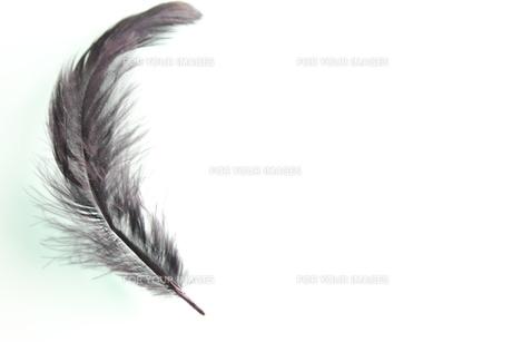 黒の羽根の素材 [FYI00126964]