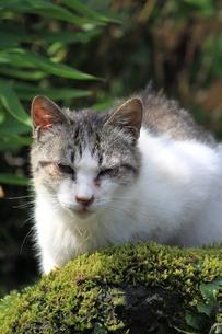 猫の写真素材 [FYI00127682]