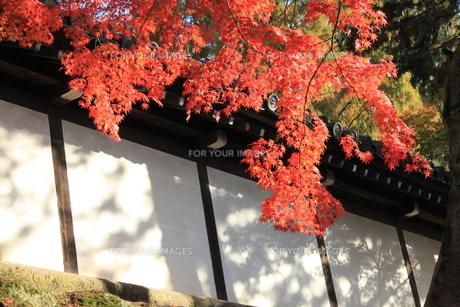 秋の日差しの素材 [FYI00127708]