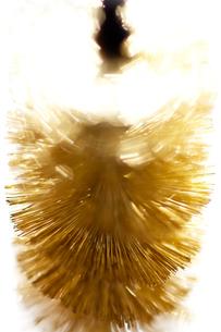金ブラシの写真素材 [FYI00127951]