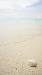 空と海と貝殻との素材 [FYI00128089]