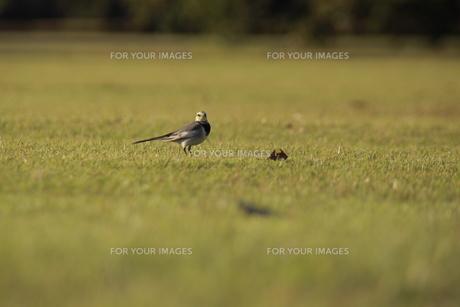 鳥の視線の素材 [FYI00128098]