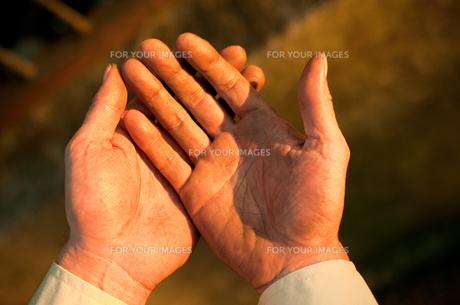 労働者の手の写真素材 [FYI00128153]