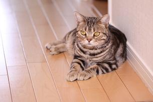 たたずむ猫の写真素材 [FYI00128319]