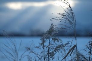 雪野原と雑草の素材 [FYI00128378]