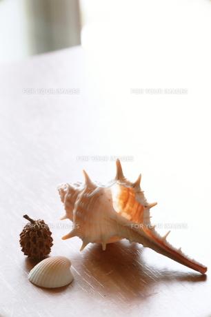 テーブル上の貝殻の素材 [FYI00128428]